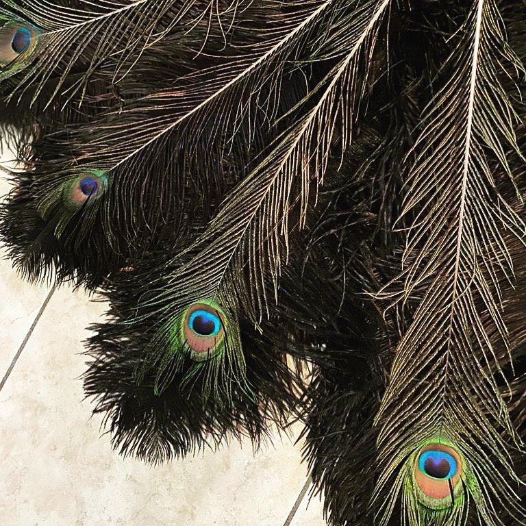 Pavone (peacock)